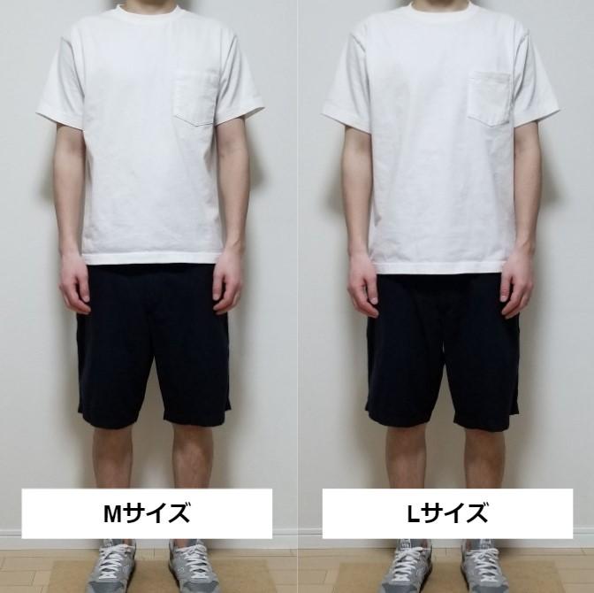 ヘインズ・ビーフィーのMとLのサイズ感の比較